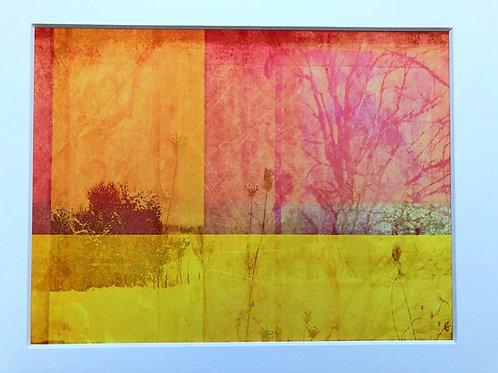 Justine Miller, Summer Hues, 30cm x 24cm mounted, print