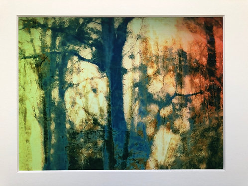 Justine Miller, Wood IV, 30cm x 24cm mounted, print
