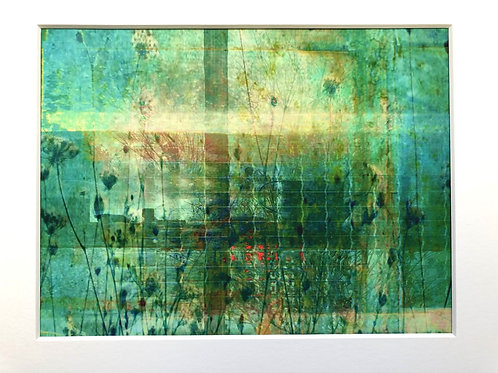 Justine Miller, From the Greenhouse, 30cm x 24cm mounted, print