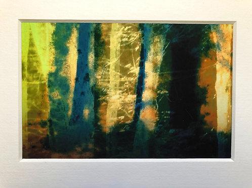 Justine Miller, Woodland, 20.5cm x 15.5cm mounted, print