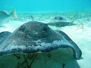 Best Diving in Belize | RAID