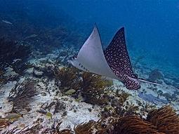 Belize reef.JPG
