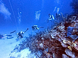 Turneffe Atoll-scuba diving belize prices.JPG