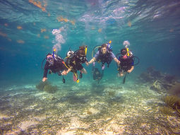 Family diving in Belize.JPG