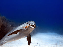Diving in Belize with dolphin.JPG