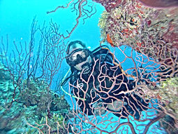 Ambergris Caye dive lessens.JPG