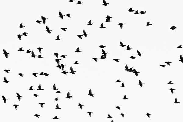 low-angle-photography-of-flock-of-flying