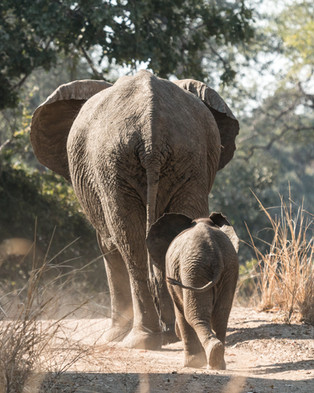 South Luangwa National Park - July 2018