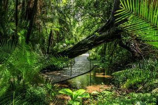Victoria Falls National Park - December 2016