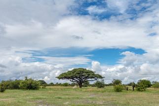 Hwange National Park - December 2020