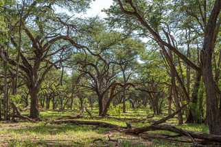 Hwange National Park - December 2019