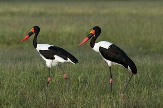 Hwange National Park - February 2021