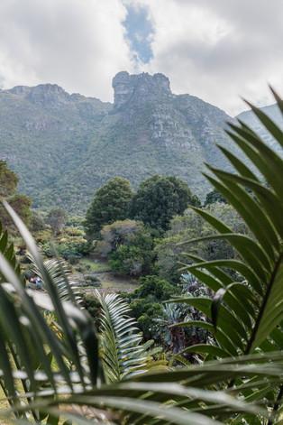 Kirstenbosch Gardens - April 2018