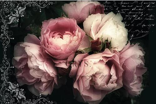 Dark Rose w/s