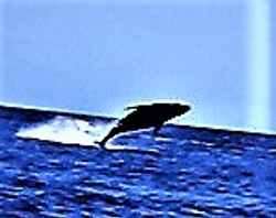 Whale out of water 2
