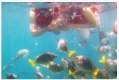 cabo snorkel