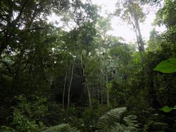 Ngogo, Kibale National Park