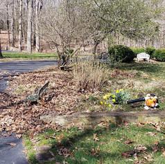 leaf removal, leaf clearing 23234.jpg