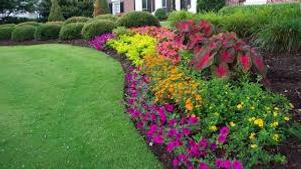 flower beds planting flowers perinnials
