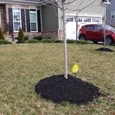 Tree Root protection, mulching, horticul