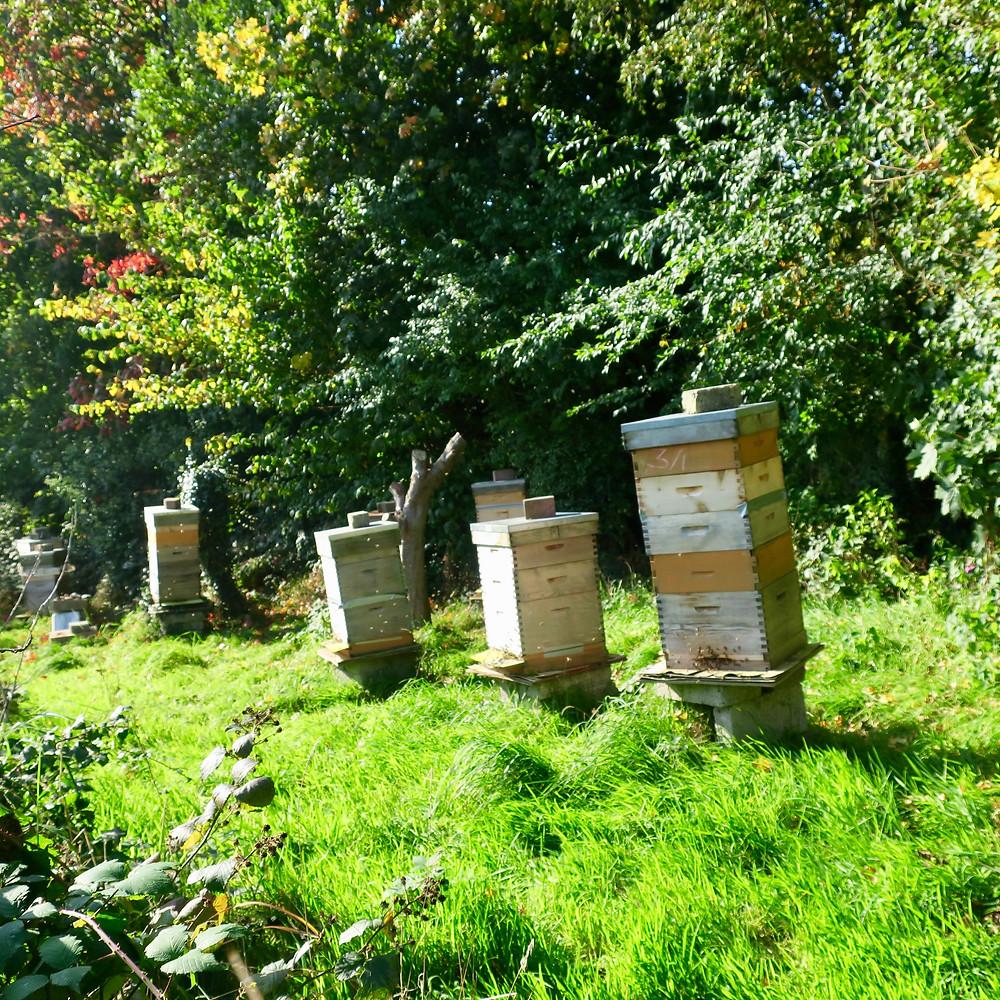 Mourne Grange's Six Beehives
