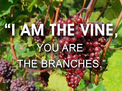 I am the vine.jpg