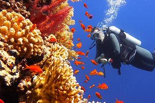 diving5-960x640.jpg