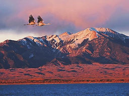 400-sandhill-crane-pair-fly_edited.jpg