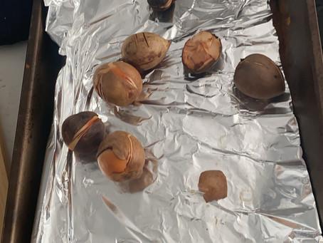 Avocado seeds!