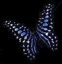 blue+butterfly.jpg