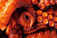 อาหารทะเลเหินฟ้าD&SEAFooD