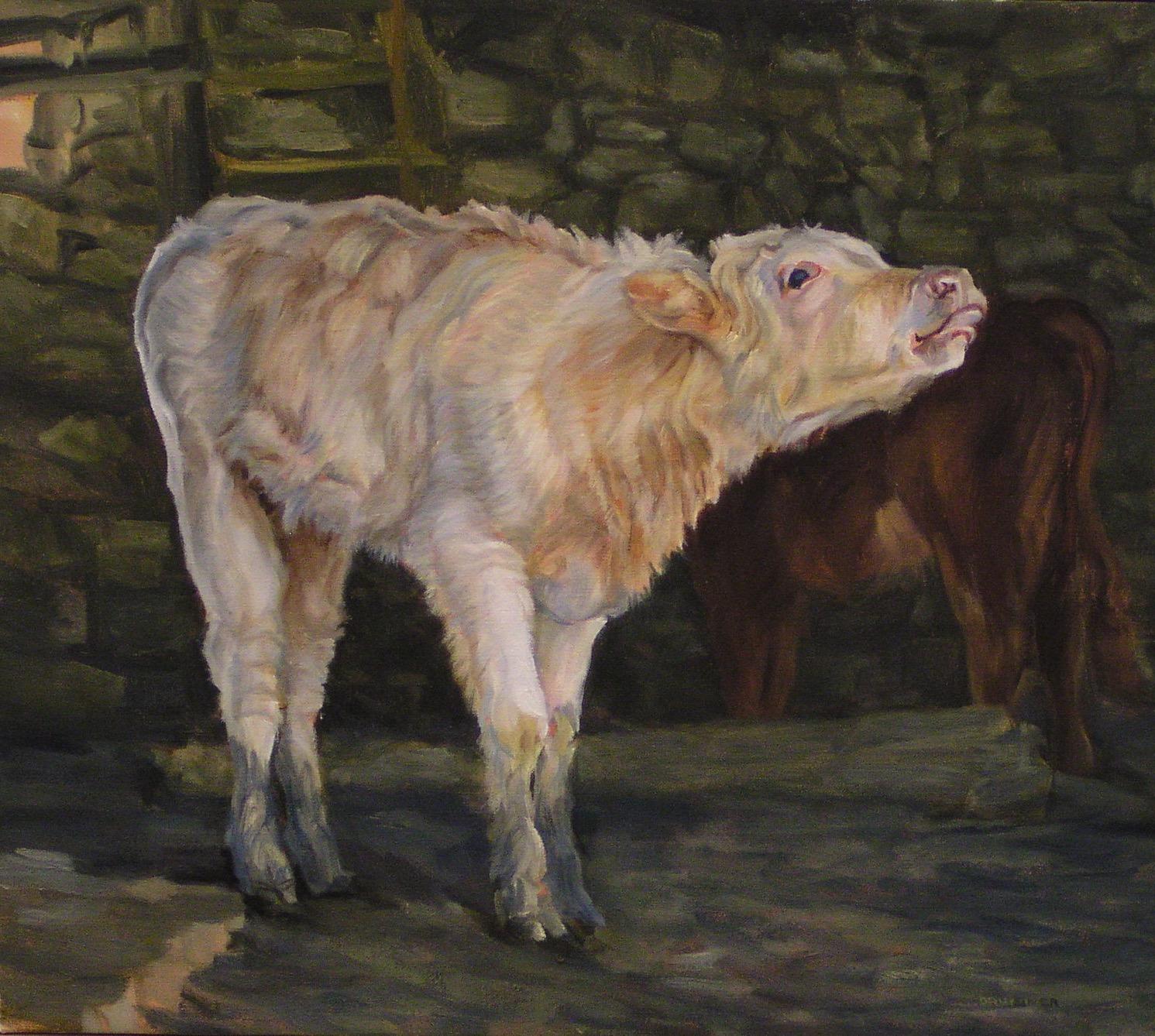 Calf Bleating