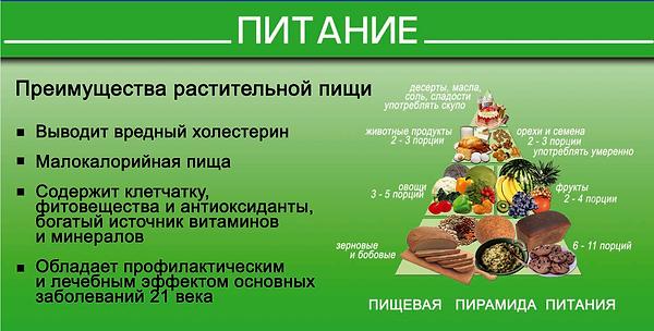 пирамида питания.PNG