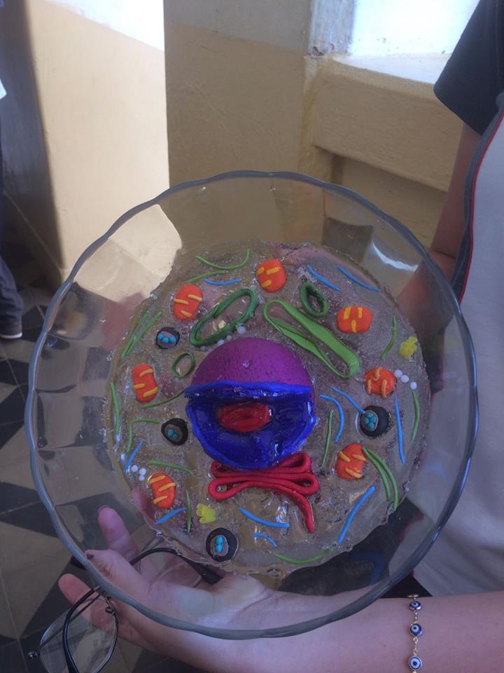 A célula Eucarionte e suas estruturas – Ciências – Prof. Rosiely – 8º ano – Ens. Fund. 8