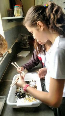 Observando Tentilhões de Darwin – Ciências – Prof. Rosiely – 7º ano – Ens. Fund. 3
