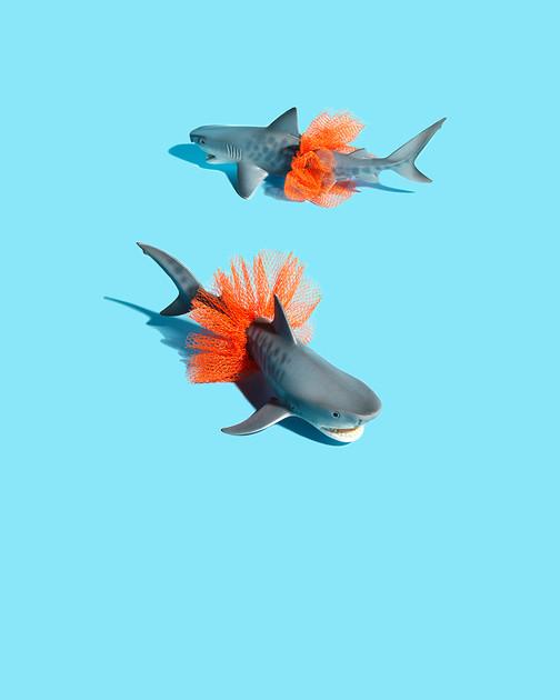 zomerhoroscoop-vissen.jpg