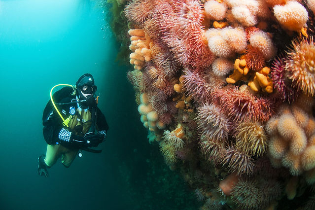 Lofoten Diving Anemone_Wall.jpg