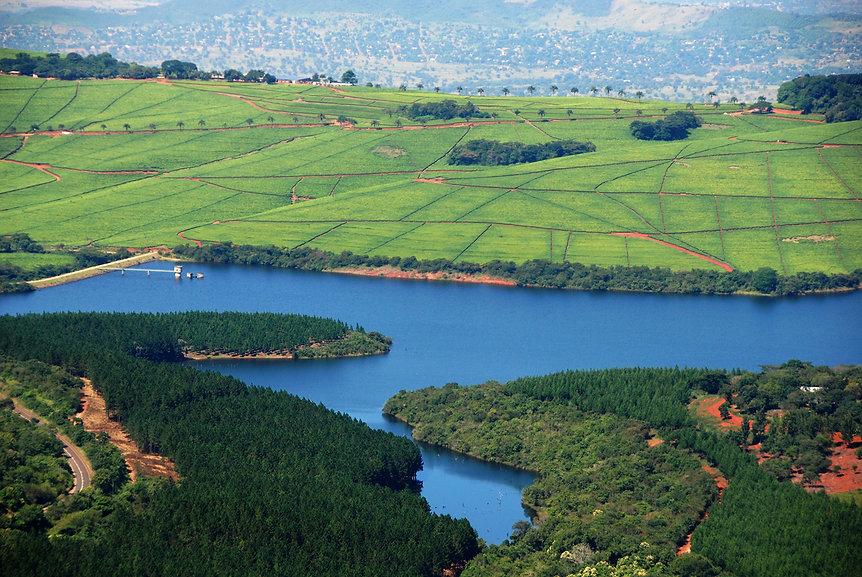 Tea estates seen from Tathe Vondo forest