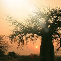VBR is SA_s Baobab country (2) Photo Elthea Schlesigner_edited.jpg