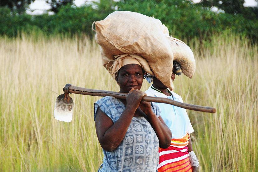 In Venda women are the subsistence farme