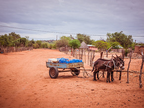 The Conservation Continent - Positioning Africa for a Post-Covid Lifestyle Shift
