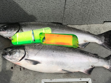 Best Chinook Fishing in Decades