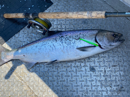 Non Retention for Chinook Salmon Till August 1st