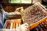 bio sicilian honey