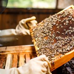 Chainbridge Honey Farm, Berwick