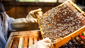 Les produits de la ruche
