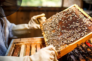 Imker Holding ein Honeycomb