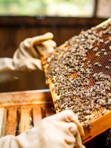 Apicultor Segurando um favo de mel