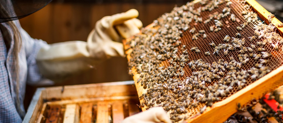 National Apiculture Programme and sampling for better bees in Ireland