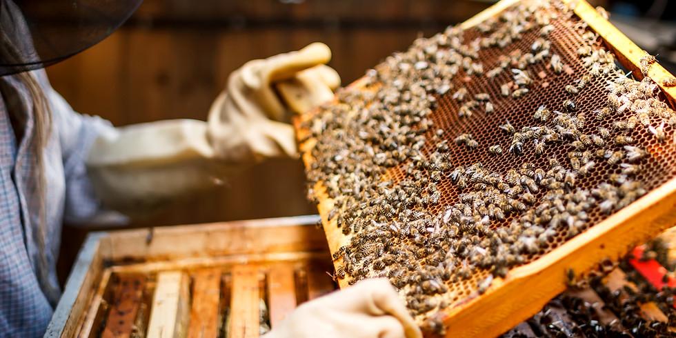 Bee Disease Day